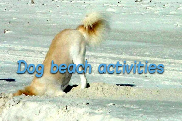 Beach activities for dog